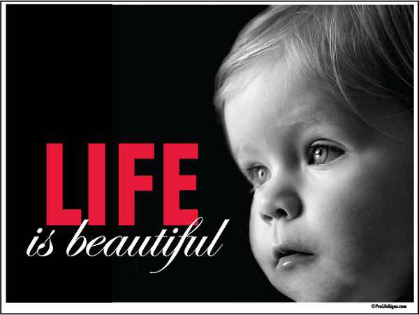 Pro Life Quotes Enchanting Pro Life Directory Of Our Pro Life Pages
